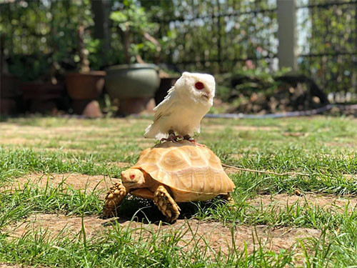a home for pet reptiles becomes a mini zoo in southern vietnam hinh 2