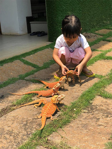 a home for pet reptiles becomes a mini zoo in southern vietnam hinh 4