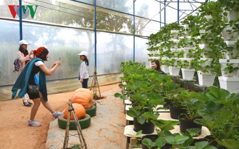 farm tours prove to be a hit among visitors to da lat  hinh 1