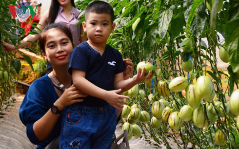farm tours prove to be a hit among visitors to da lat  hinh 0